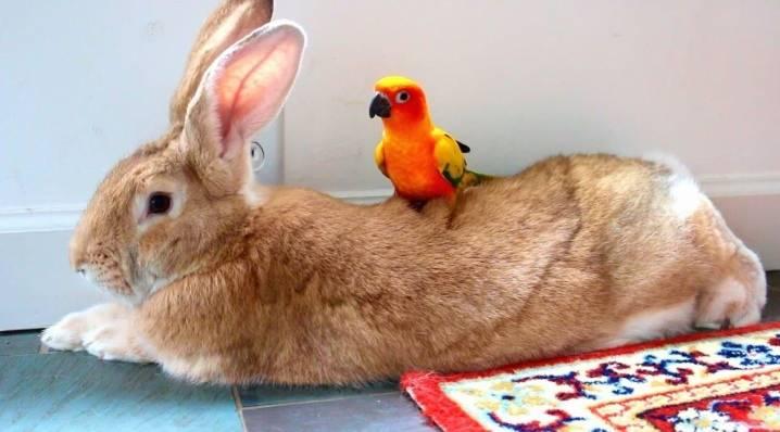 Какое имя можно дать кролику, как его выбирать для девочки или мальчика, и как можно называть питомцев