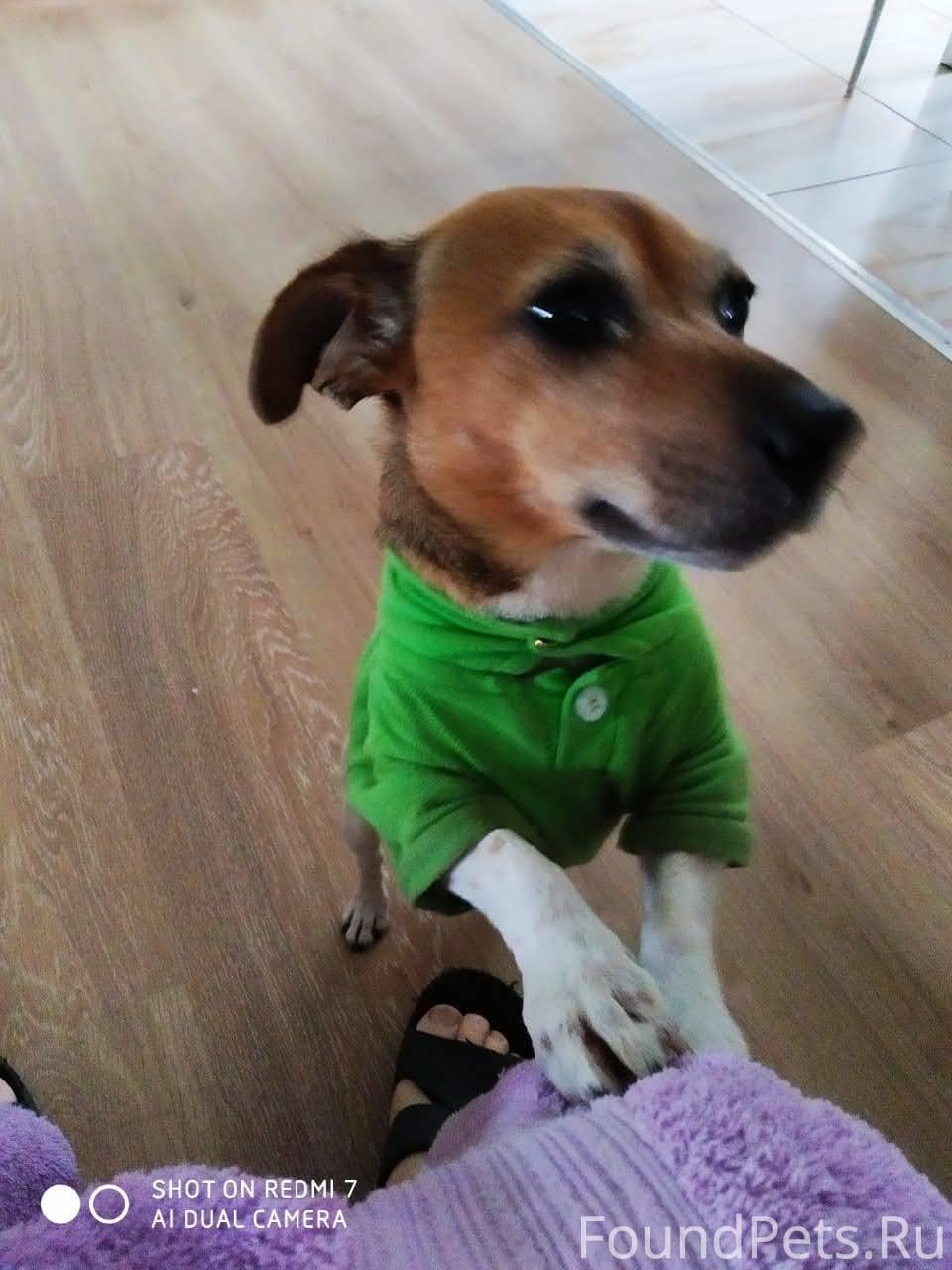 Собака из фильма «маска» с джимом керри: плюсы и минусы породы собак джек рассел терьер