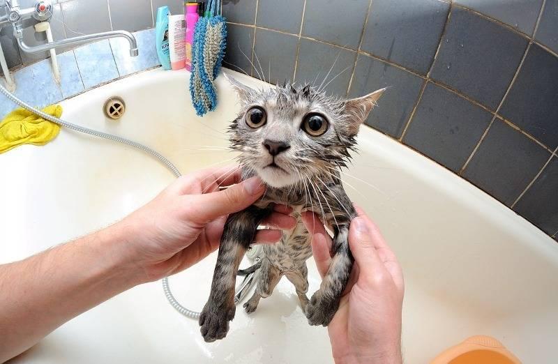 Почему кошки и коты боятся воды почему кошки и коты боятся воды