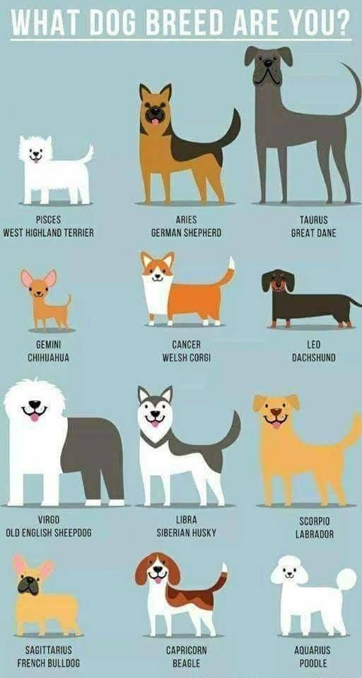 Какая собака подходит вам по знаку зодиака