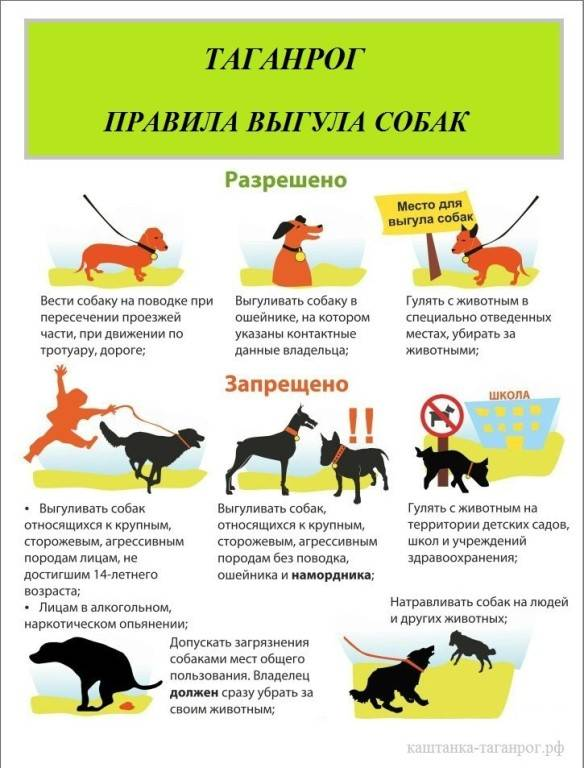 Закон о выгуле собак в 2021 году: правила в россии, штрафы в неположенных местах