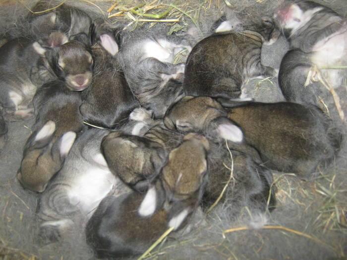 По каким причинам крольчиха может разбрасывать и съедать крольчат
