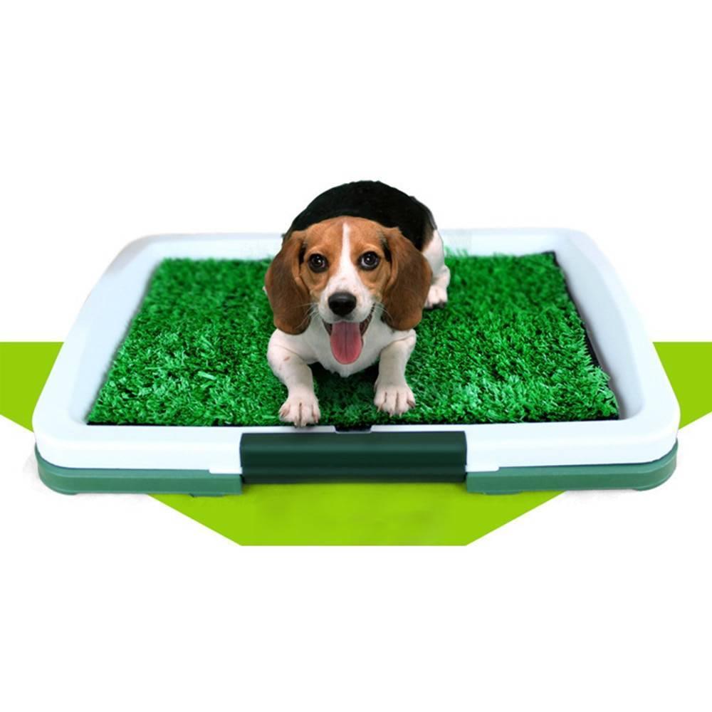 Лоток для собак или щенков в квартиру - как выбрать в зависимости от наполнителя, размера и пола питомца