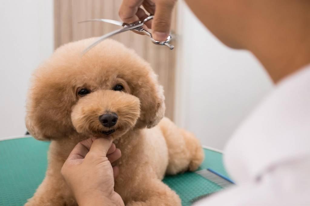 Груминг и стрижка собак на дому: особенности и важные детали