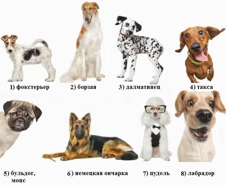 Собака по знаку зодиака: как выбрать под любого человека