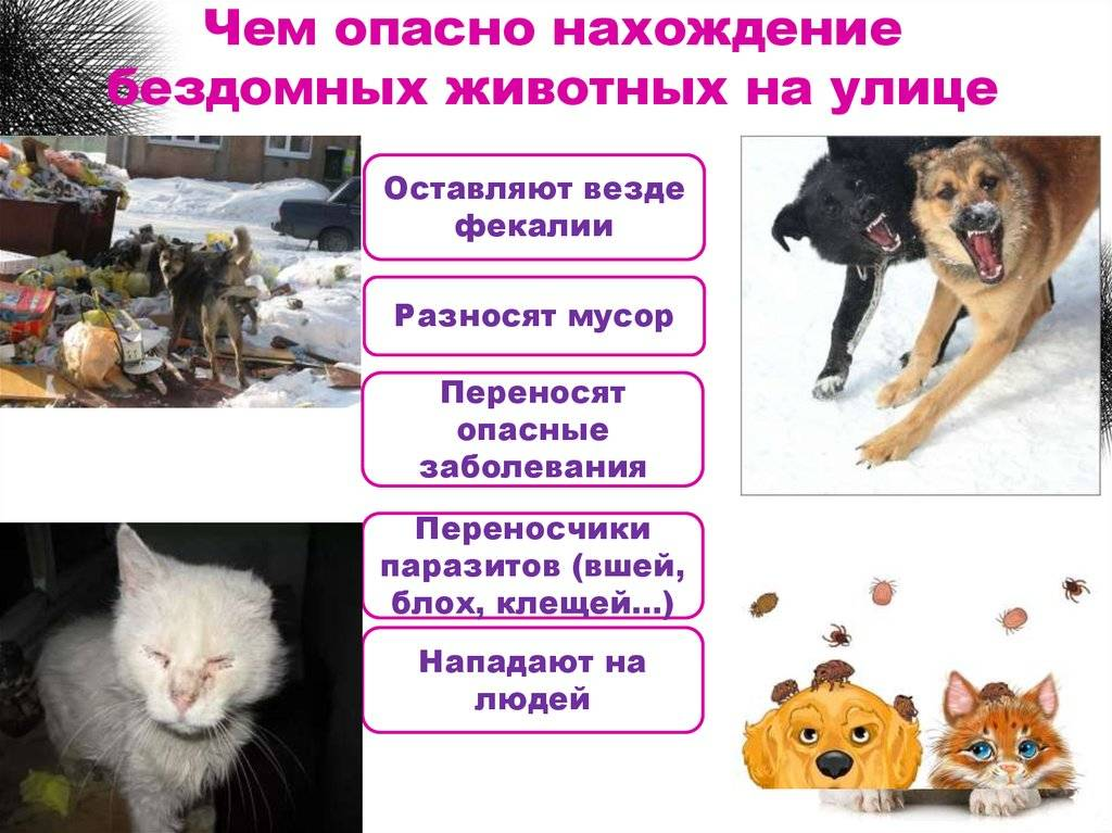 Приют для собак: чем вы можете помочь?