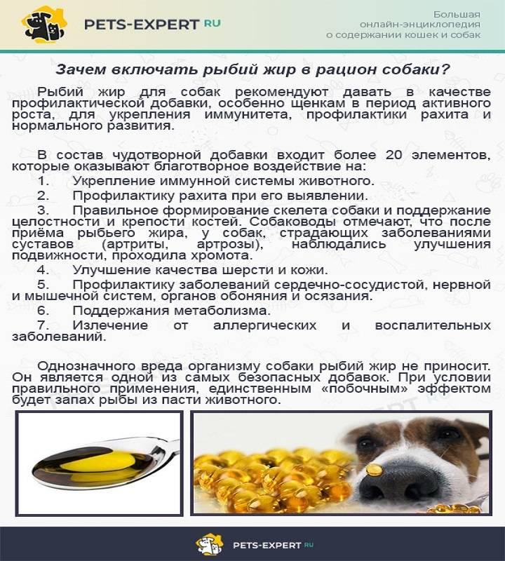 Вред сухого корма для собак