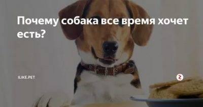 Почему собака не ест, только пьет воду: 8 причин, по которым питомец отказывается от еды