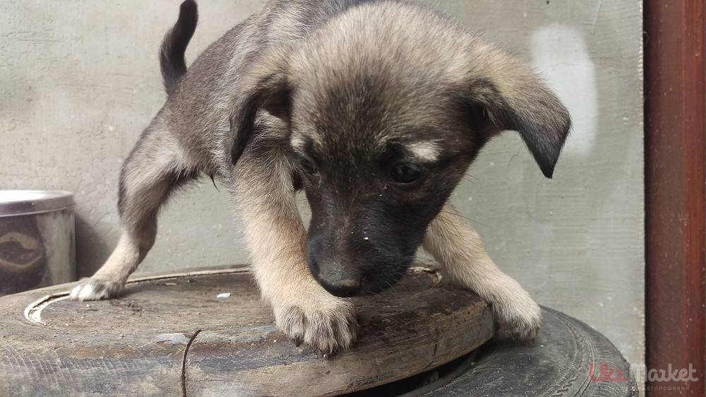Сколько живут собаки дворняжки в домашних условиях