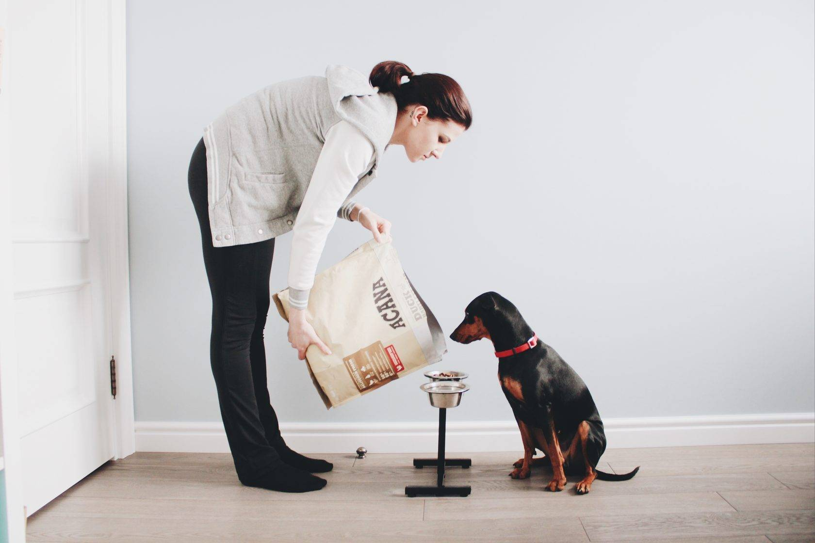 Ошибки при дрессировке собак и способы их исправить