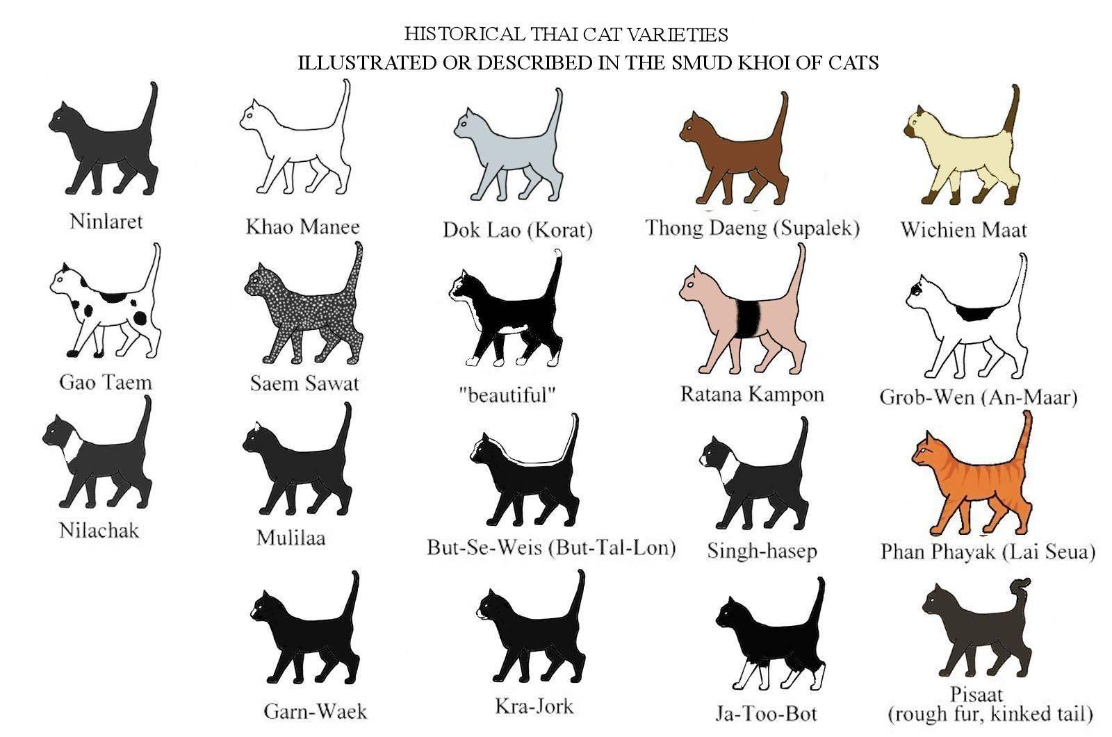Какие бывают породы кошек? как выбрать кошку по породе? - новости бурятии и улан-удэ