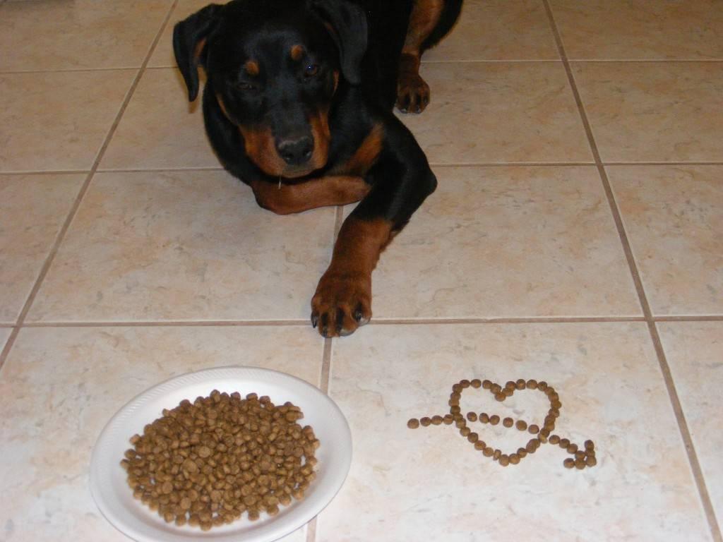 Почему собаки едят экскременты – свои, других псов и человеческий кал, что делать?