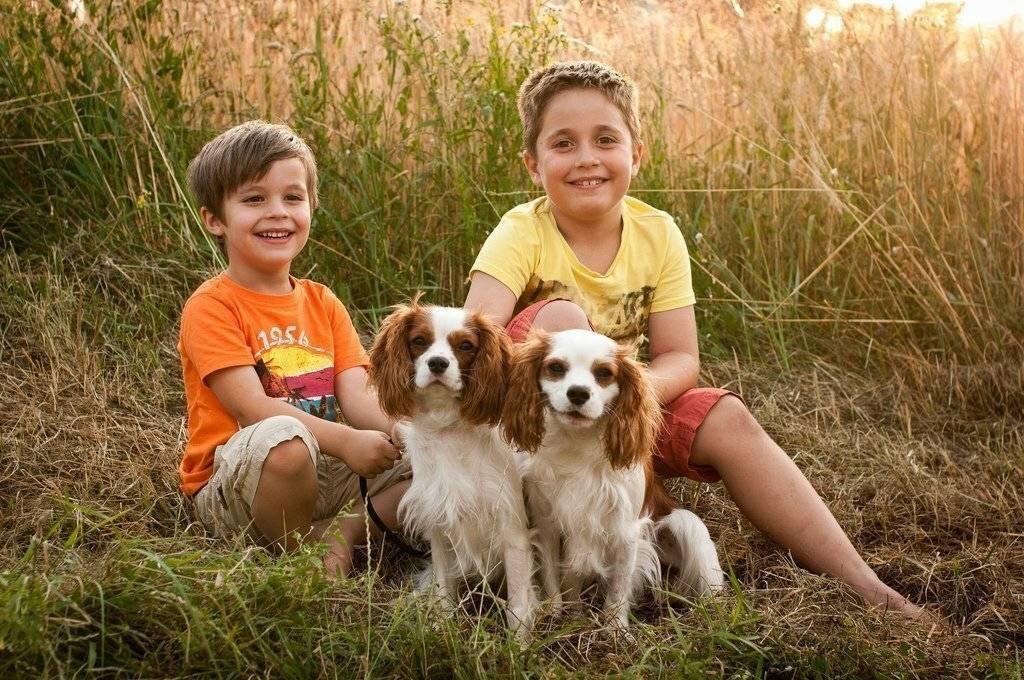 ≡ топ 15 ᐈ лучшие породы собак для ребенка | woofy dog
