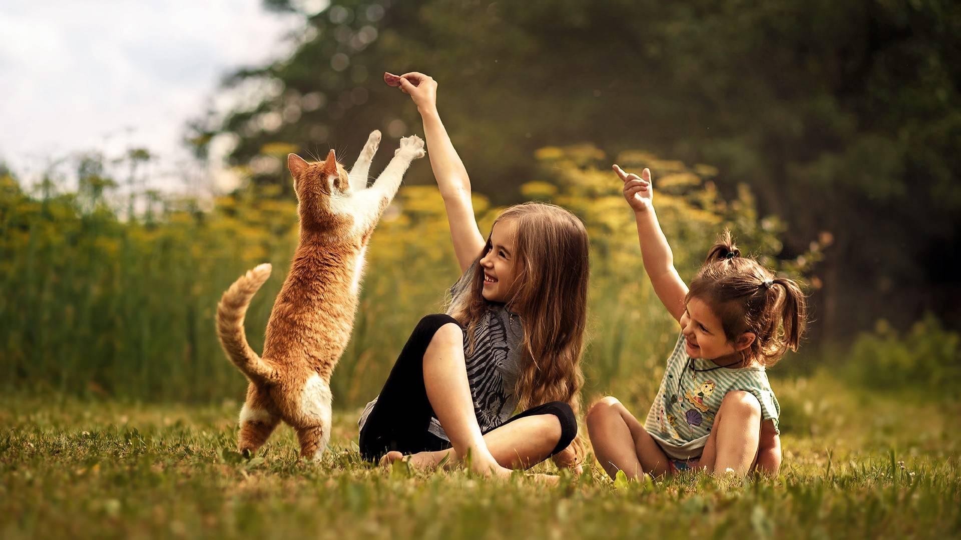 Как определить и поддерживать здоровый вес кошки?