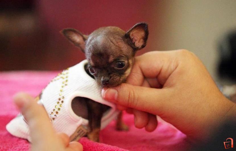 Маленькие породы собак с фото