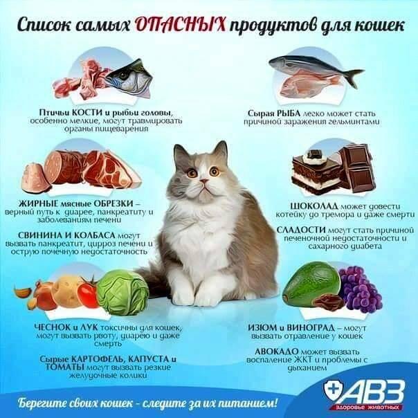 Витамины для кошек: какие лучше выбрать, какие нужны