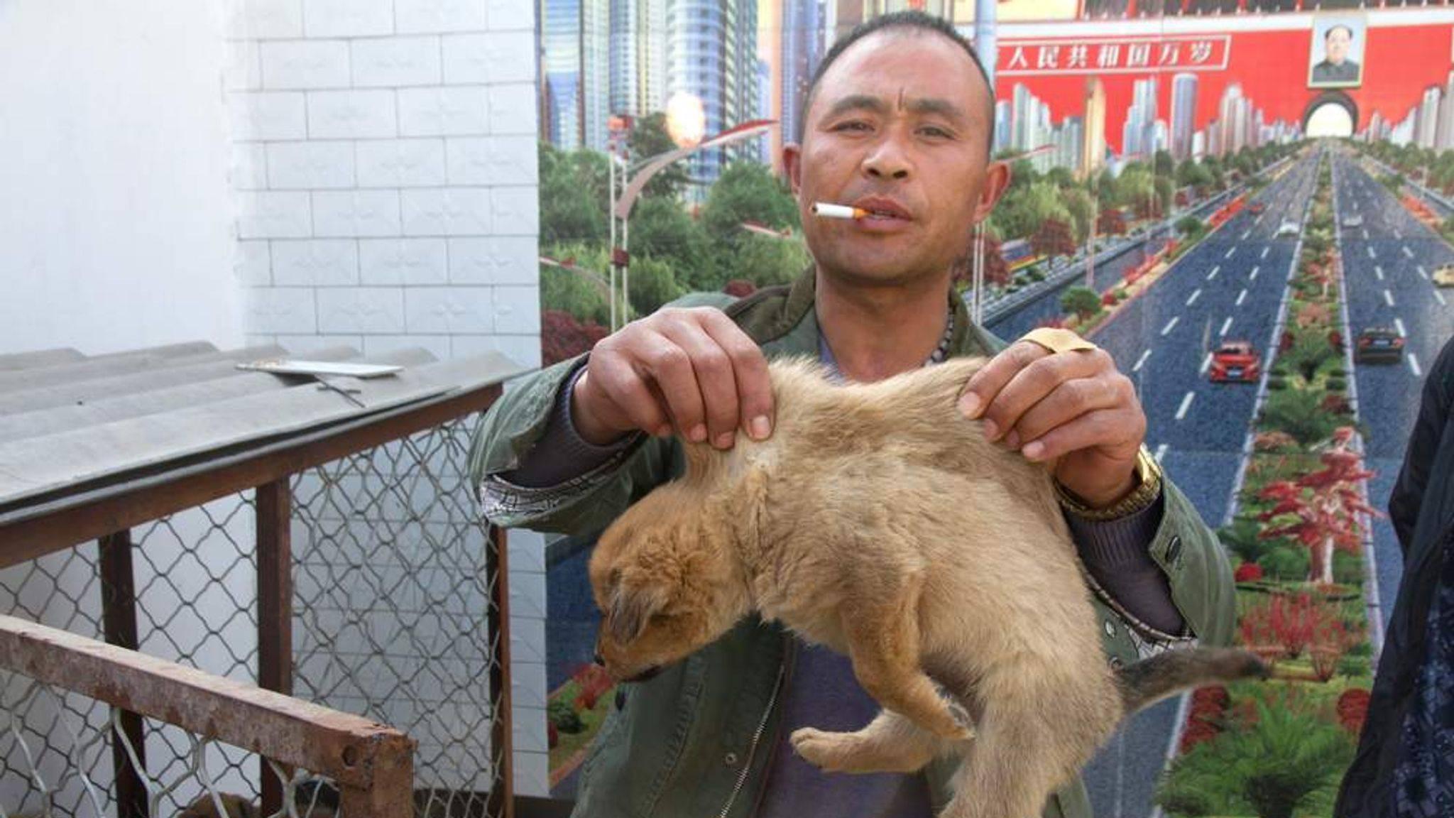 Китайцы нюхают котов: зачем и почему они это делают, чем опасно такое развлечение