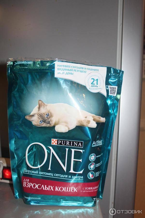 15 лучших влажных кормов для кошек