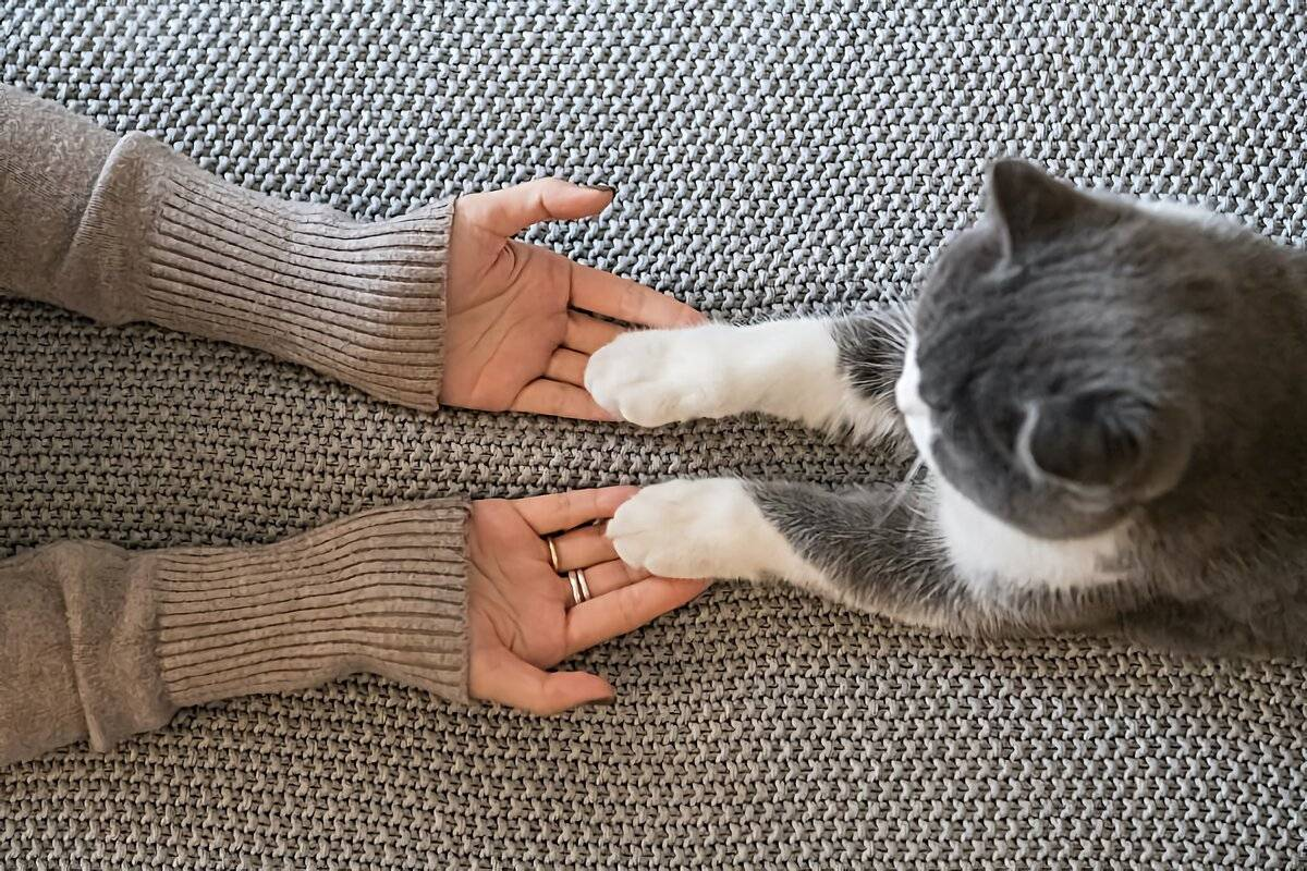Как отучить кота кусаться? почему кошка нападает, когда ее гладишь? что делать, если котенок кусает хозяйку за ноги?