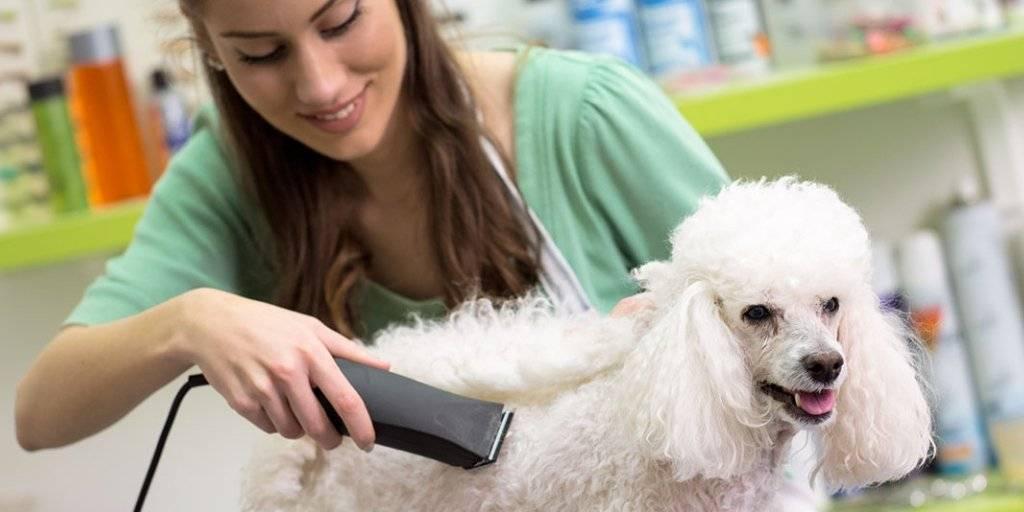 Как правильно ухаживать за собаками?