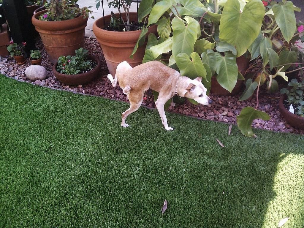 Почему собаки валяются в тухлятине и экскрементах: причина