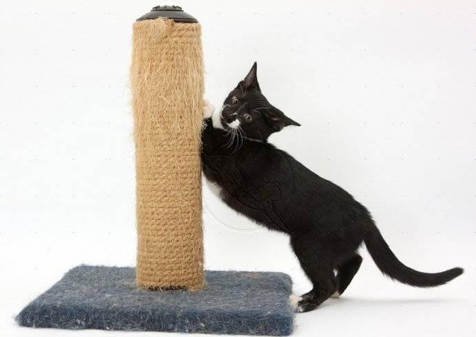 Какую когтеточку выбрать для кошки и в чем ее польза