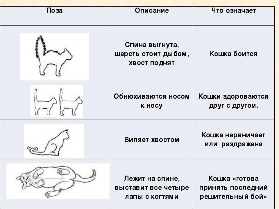 Переохлаждение и обморожение у кошек