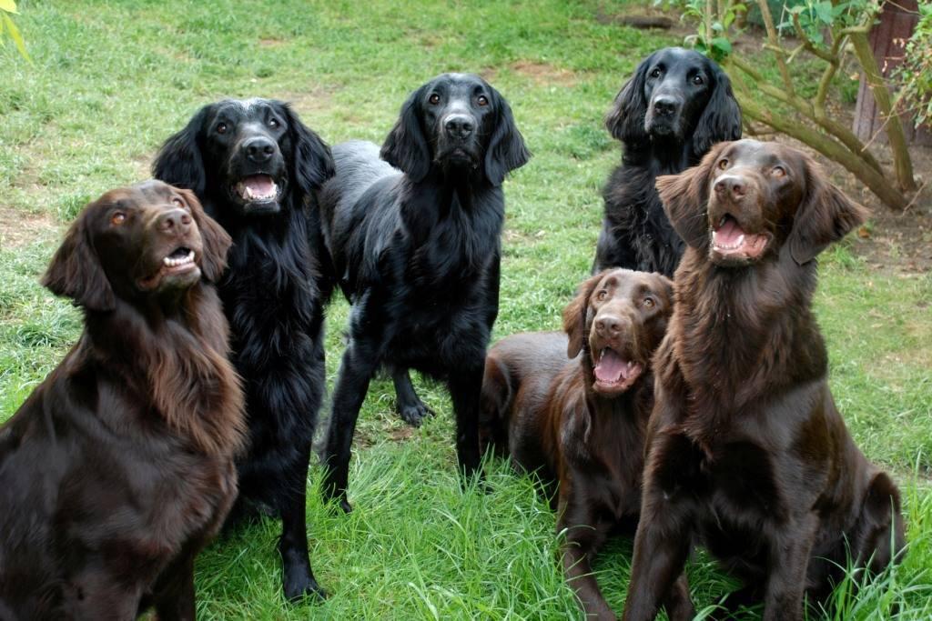 Особенности черного лабрадора-ретривера: фото собак, черты характера, внешнее описание, правила ухода и выбор щенка