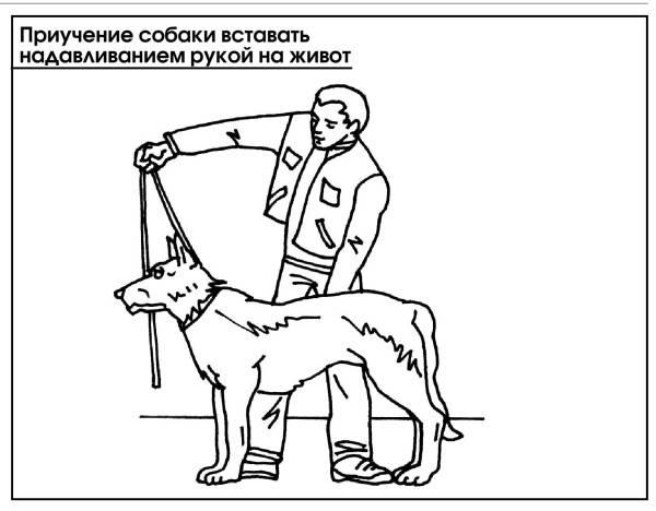 Дрессировка собак – какие команды проще обучать, полезная амуниция для тренировок и советы для домашней дрессуры