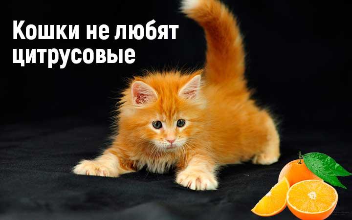 Какой запах отпугивает кошек