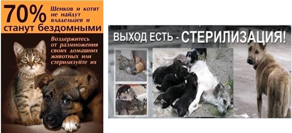 Сейчас собак не усыпляют. даже самые дикие собаки остаются  жить