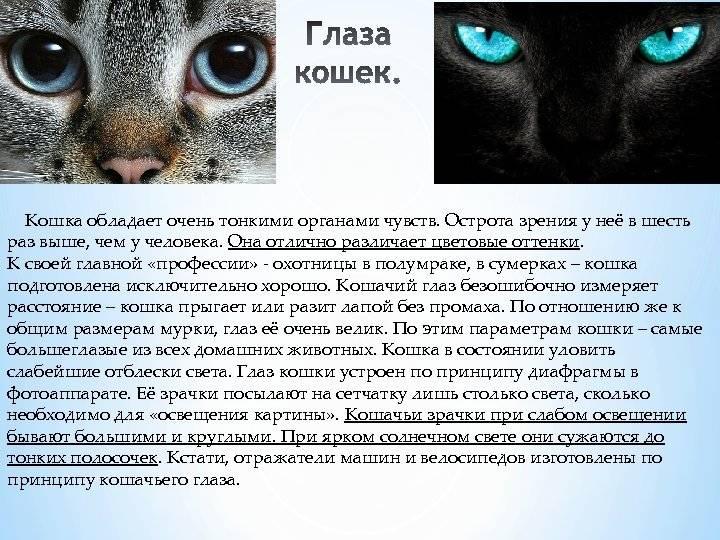 Характер кошек: породные особенности, типы темперамента