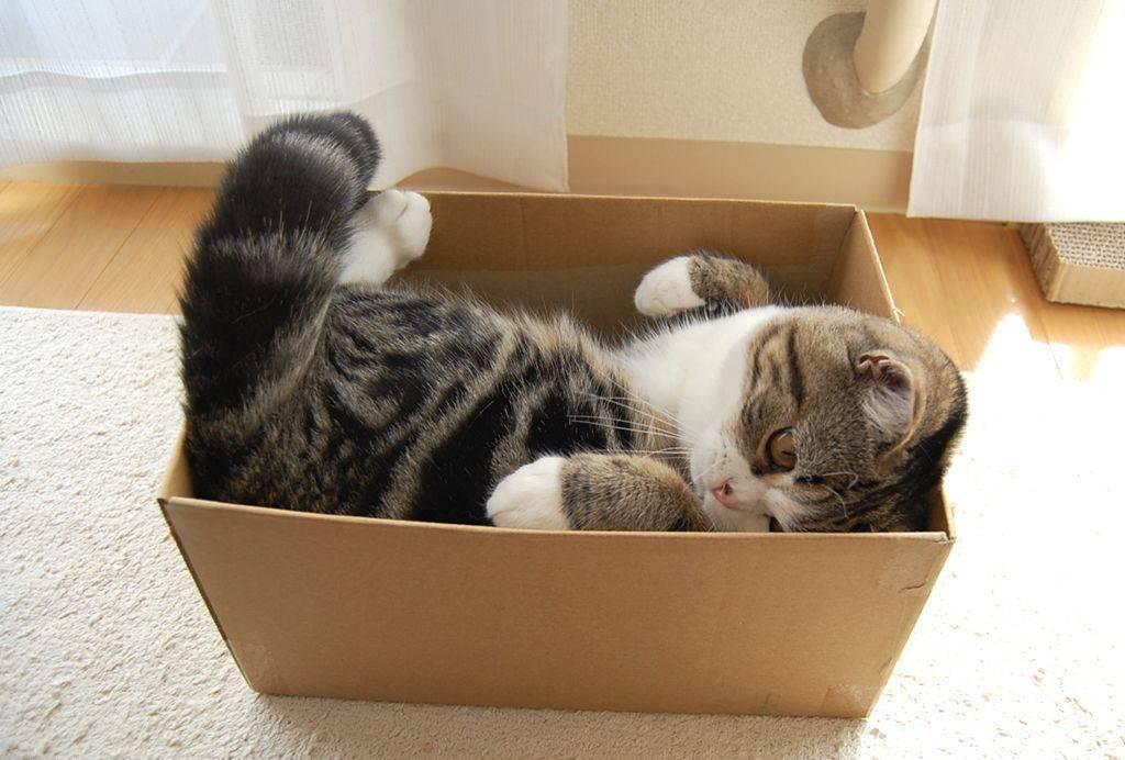 Почему коты и кошки любят коробки, в каких ещё местах им нравится прятаться
