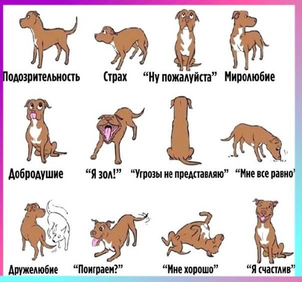 Надо ли очеловечивать собак - секреты домашнего груминга