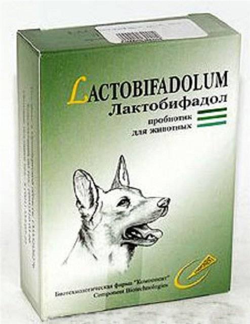 Пробиотики для собак – мелких, средних, крупных пород, для щенков, название препаратов, список лучших
