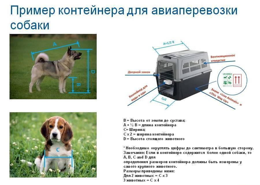 Правила перевозки собак в самолете: документы, требования