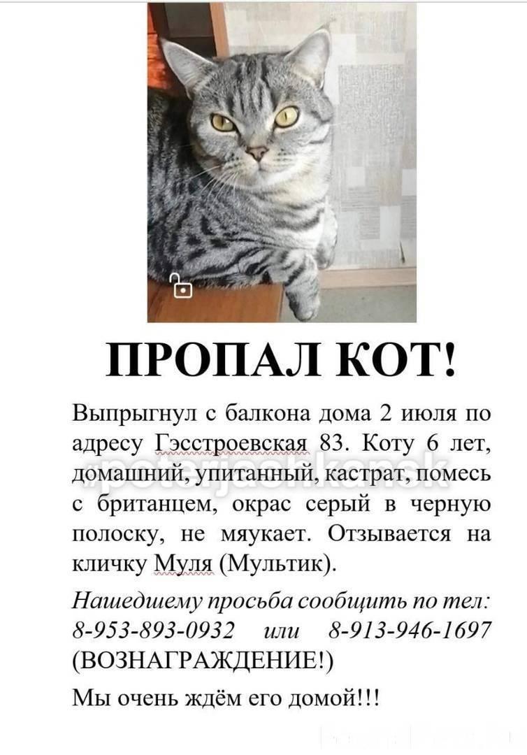 Пропал кот... к чему это? - магия это мы - страна мам