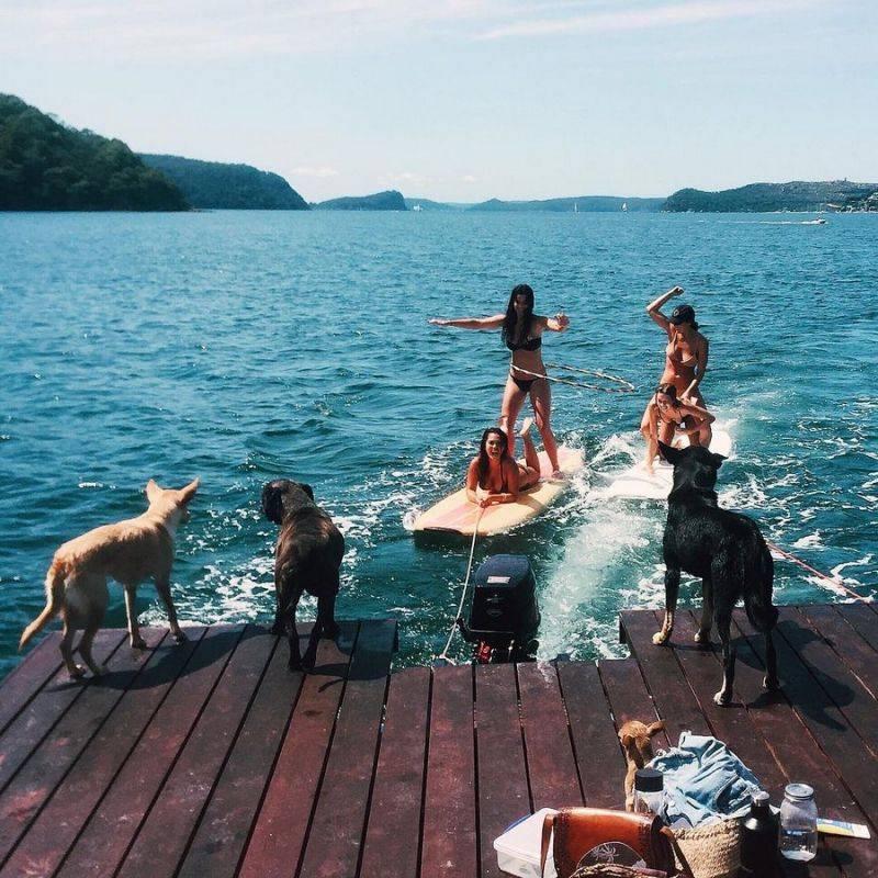 Куда лучше всего поехать отдыхать на море вместе с домашней собачкой