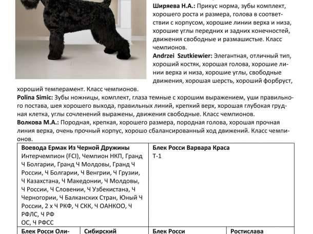 Черный терьер (собака сталина): выносливый охранник с дружелюбным характером