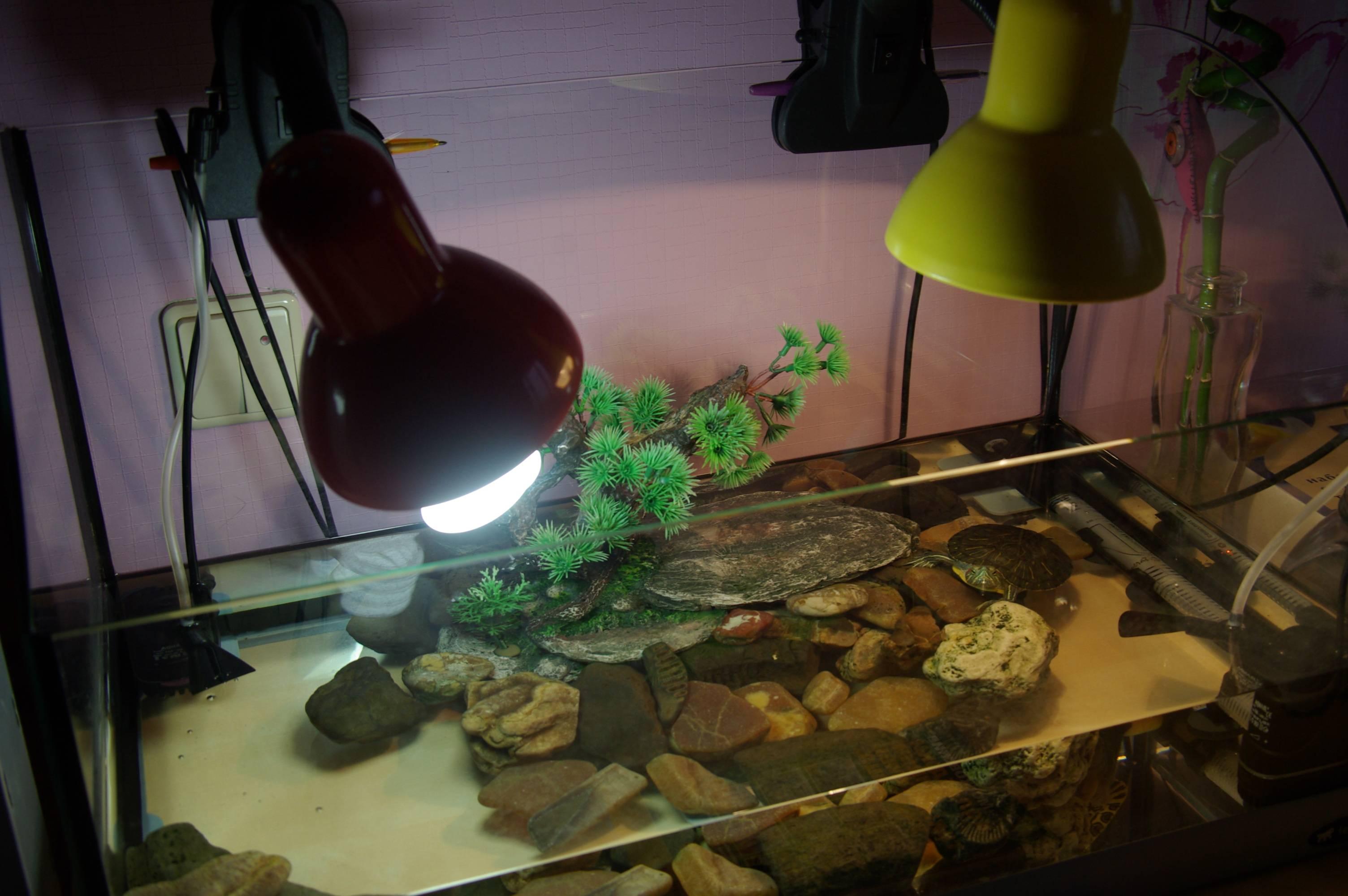 Советы ветеринара - герпетолога: красноухие черепахи.. обсуждение на liveinternet
