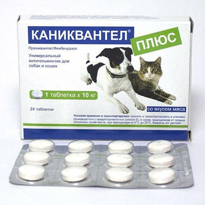 Каниквантел для кошек: инструкция по применению и дозировка лечебного препарата (80 фото)