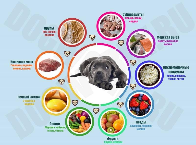 Виды мясопродуктов для кормления собак