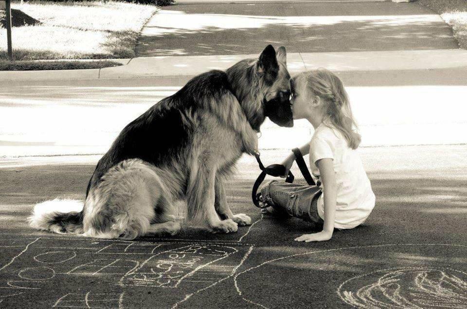 Самый лучший друг: может ли собака забыть хозяина? - новости на buden