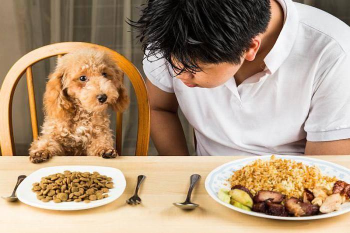 Собака отказывается от еды