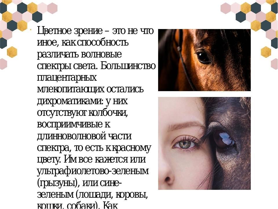 Как видят собаким мир и какие цвета различают