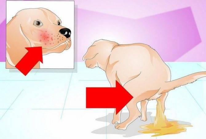 Желтый кал у собаки: причины какашек оранжевого цвета