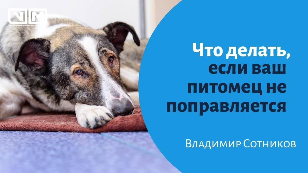 Как оберег для собаки сделать своими руками: фото схемы для плетения, вышивки и какие еще методы используют для защиты питомца