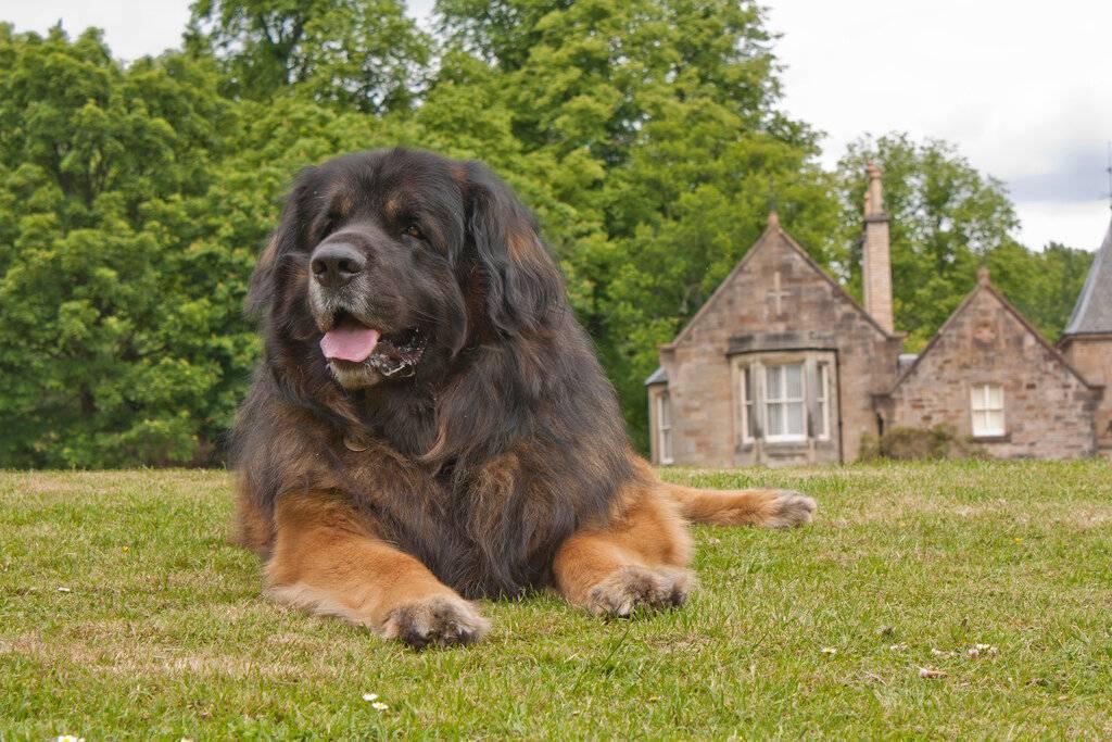 Породы больших собак: название, фото и основные характеристики