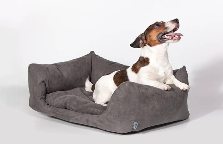 13 лучших производителей лежанок для собак - рейтинг 2021
