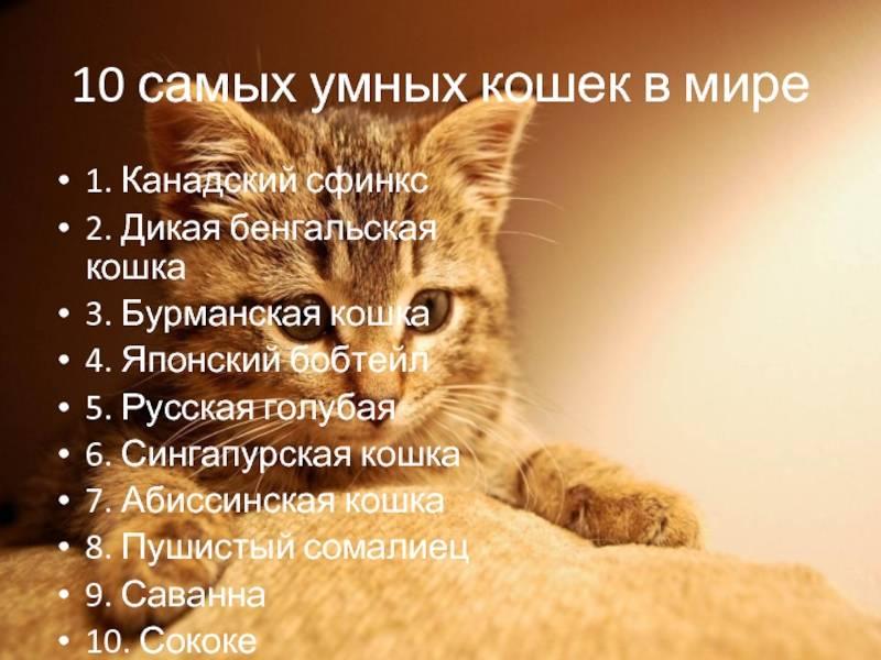 Топ-10 самых умных пород кошек: интересные факты и фото питомцев